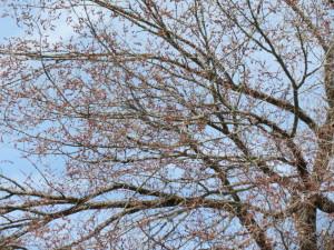 twitterbudding tree
