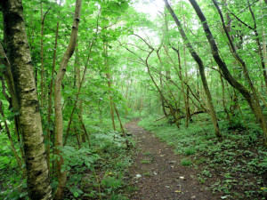 twitter path in woods